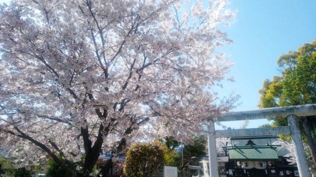 近所の桜を見に行く!